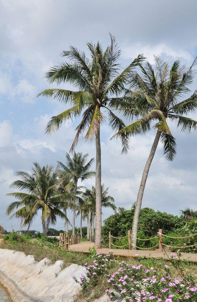 文昌椰子树图片素材考拉猫家装设计软件怎么用图片