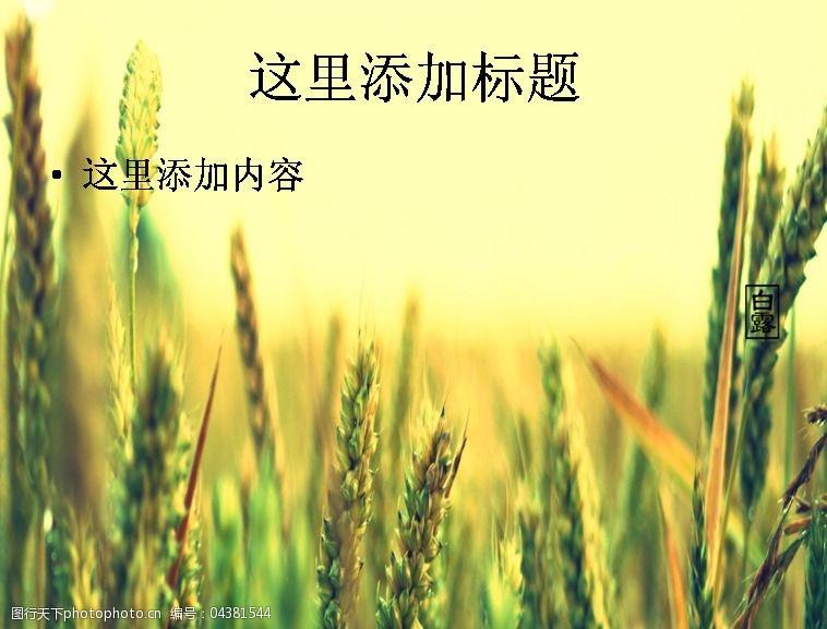 风景ppt封面白露时节高清ppt封面(3)