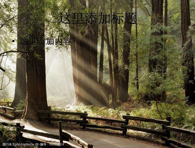 风景ppt封面穿透树林的光线高清ppt封面(9)