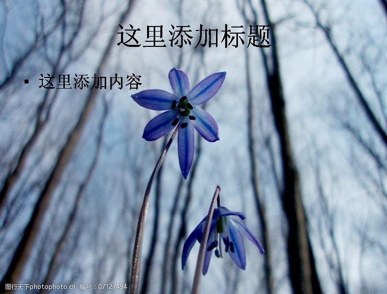 风景ppt封面地中海蓝钟花高清ppt封面(4)