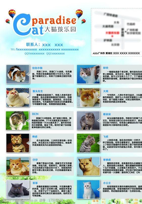 cfa宠物店宣传单张图片