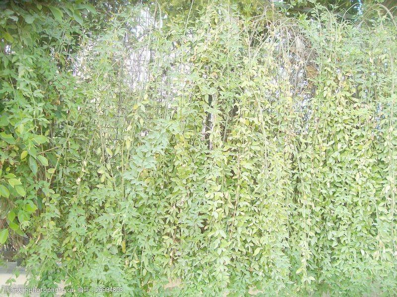green_plants_background