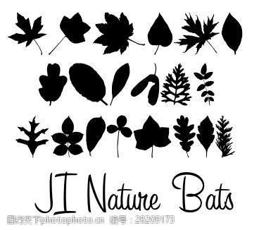 后记集自然蝙蝠字体