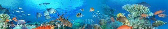 海鲜图片免费下载海底海鲜图片